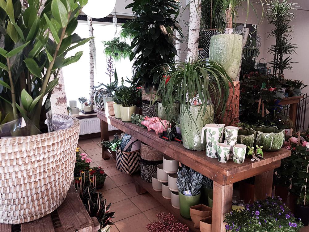Pflanzen Starnberg