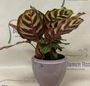 NR.19 Pflanze 18,50€