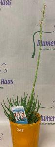 NR.9 Deko Aloe 9,50€