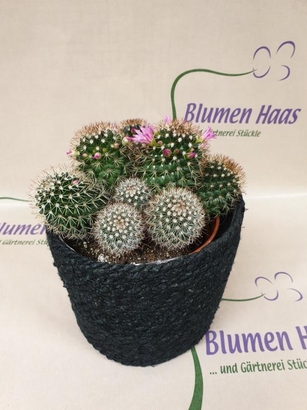 Nr.5 Kaktus 12,90€ Korb 13,50€
